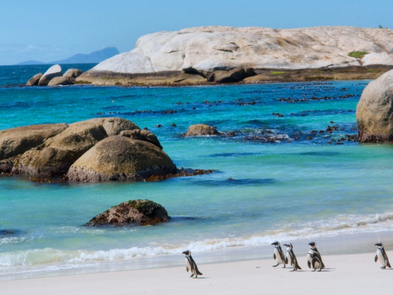 Penguins Walking on a Sunny Beach