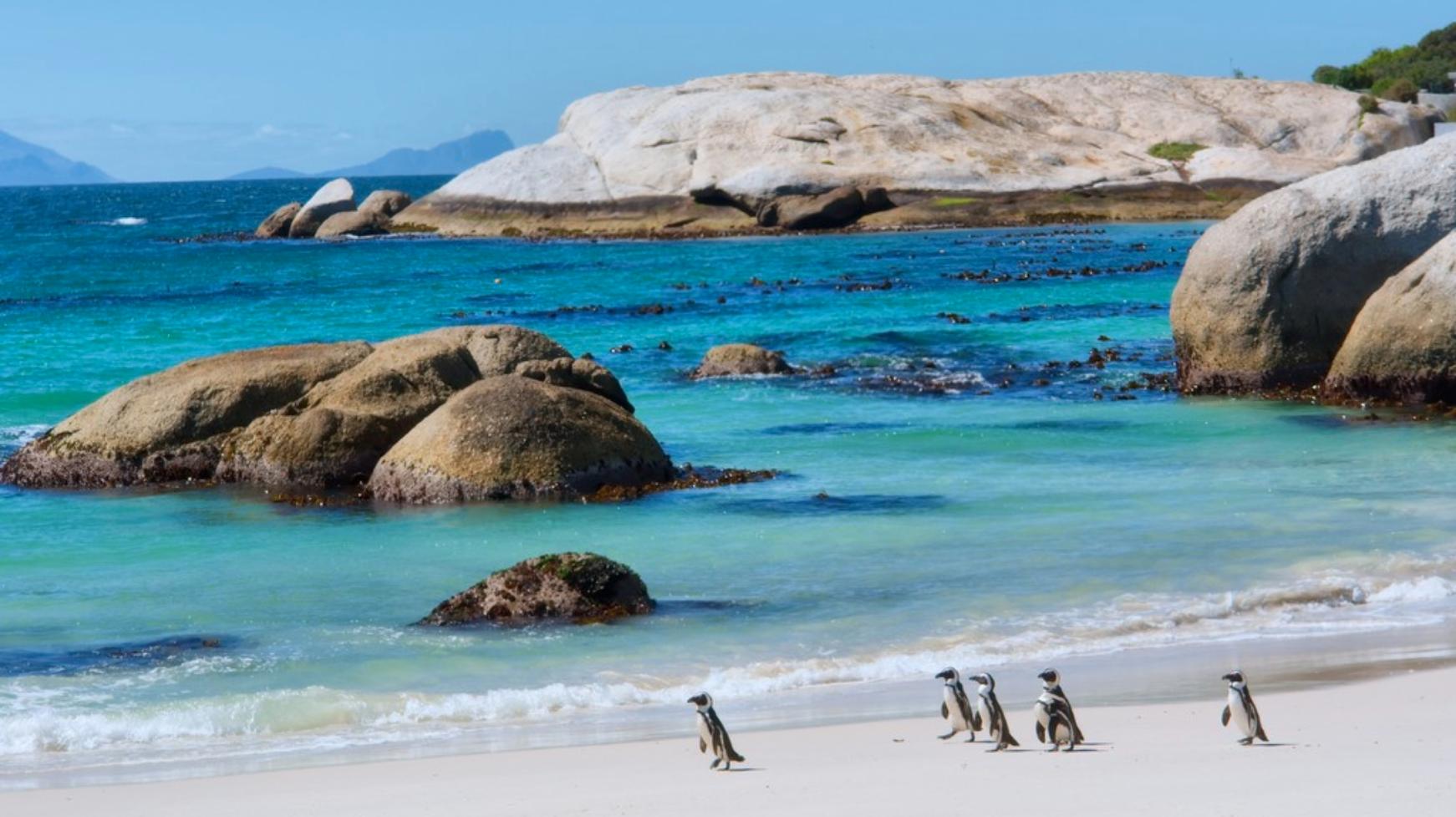 Penguins Walking on a Sunny Beach